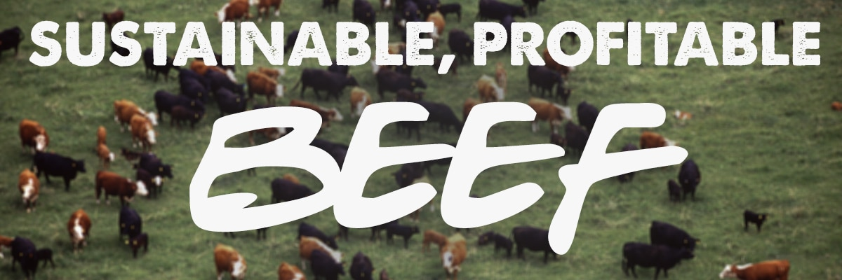 sustainable profitable beef